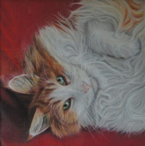 « Boss, le charmeur » Pastel sur papier – 30X30 cm
