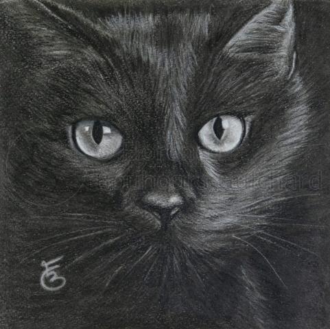 « Loulou en clair-obscur » fusain et pierre noire sur papier – 22,5X22,5 cm