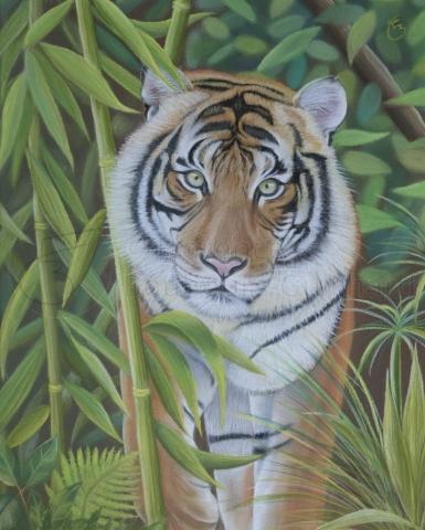 « Regard persan » pastel sec sur papier 40×50 cm