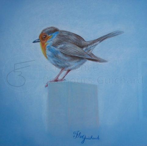 « Robin des frimas » crayon sur papier 30×30 cm